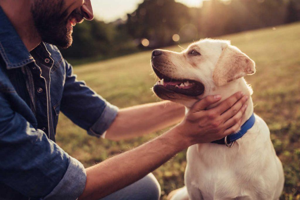 Viajar con mascotas, un fenómeno cada día más habitual